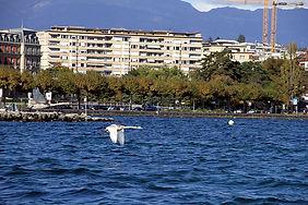 Genève 2013 (10).jpg