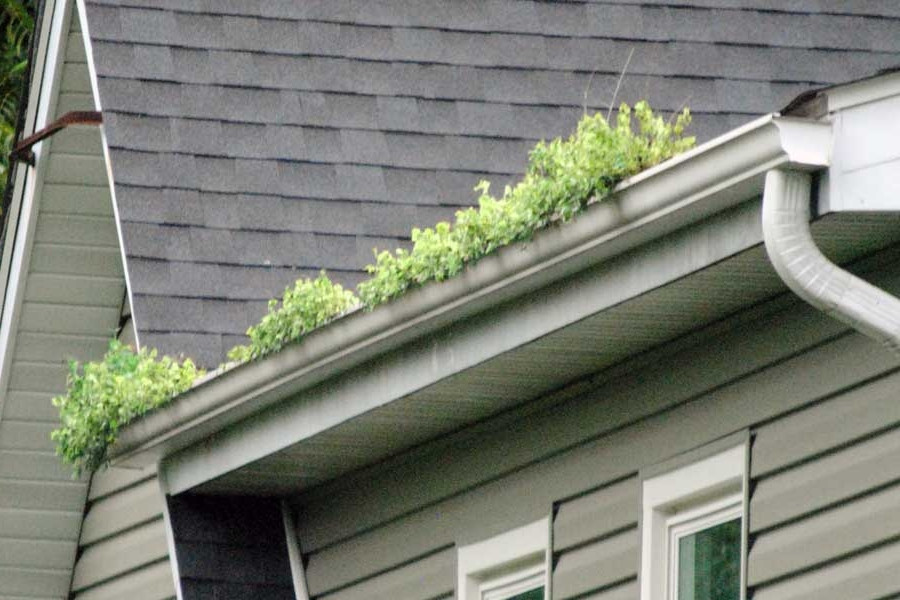 Grass growing in gutters