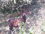Sagoma 3D cervo, percorso tiro con arco Selma