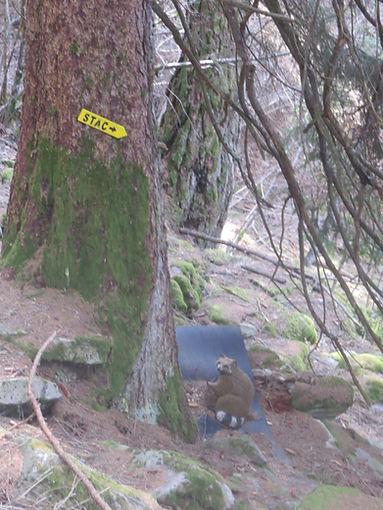 percorso tiro arco Selma (Val Calanca)