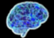 brain-951874_1920.png