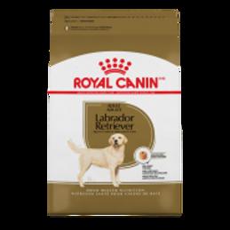 RC BHN Labrador Retriever 5.5 lb