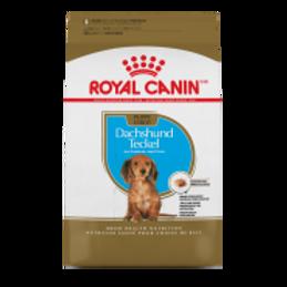 RC BHN Dachshund Puppy 2.5 lb