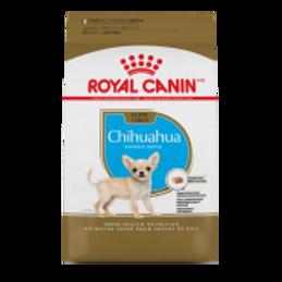 RC BHN Chihuahua Puppy 2.5 lb