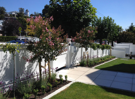 Residential Garden - Contemporary style Simple/Low maintenance