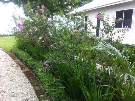 Residential Compound - Subtropical Paradise