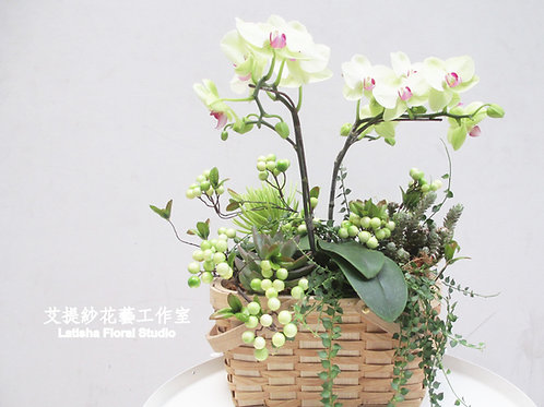 鄉村風蝴蝶蘭+植栽籃盆