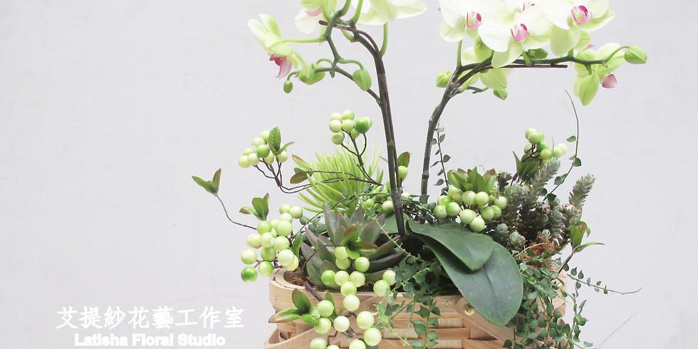 鄉村風蝴蝶蘭+植栽籃盆課程