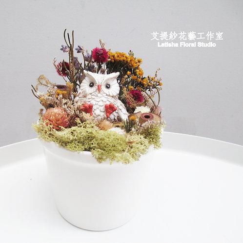 小乾燥花盆-貓頭鷹