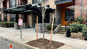 A Tree Grows on Raleigh Street