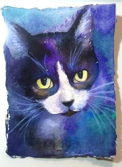 A6 cat