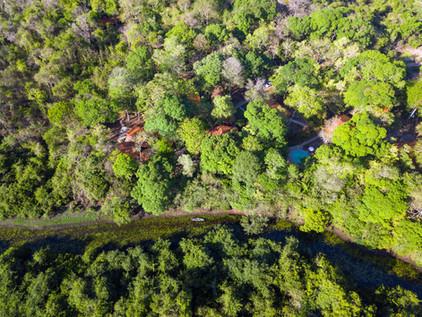 Flora Pantanal Aymara