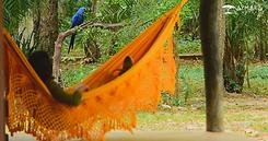 Aymara Lodge Pantanal -Visita da Arara A