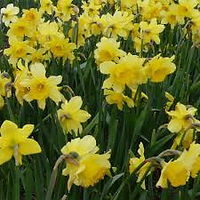 Narcis Carlton extern.jpg