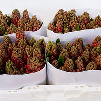 Hyacint bos Jan Bos.jpg