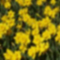 Narcis Dutch Master extern.jpg