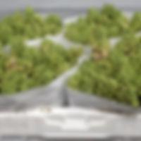 Hyacint bos Fondant.jpg