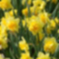 Narcis Dick Wilden extern 2.jpg