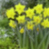 Narcis Dellan  extern.jpg