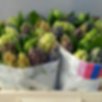 Hyacint bos 5 klmix 566.jpg