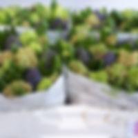 Hyacint bos 4 klmix 533.jpg