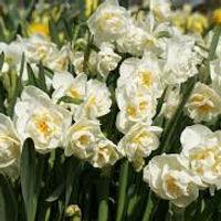 Narcis Bridal Crown extern 2.jpg