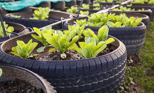 유기 야채 농장