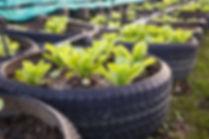Ferme de légumes biologiques