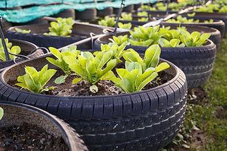 Organic Vegetable Farm