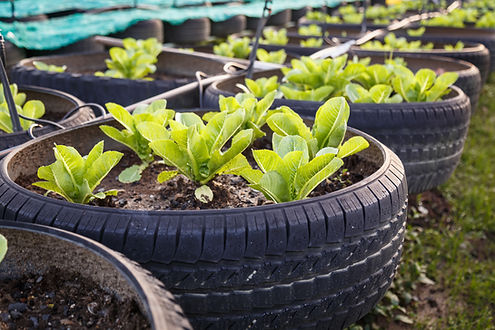 Granja vegetal orgánica