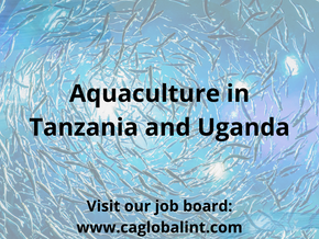 Aquaculture – Tanzania & Uganda's fishing production increases
