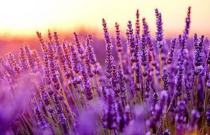 Lavender Sunset_edited.jpg