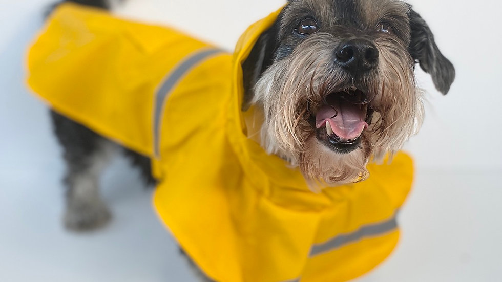 Canary Yellow Raincoat with Hi-Vis Stripe