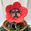 Thumbnail: FLOWER RECOVERY COLLAR