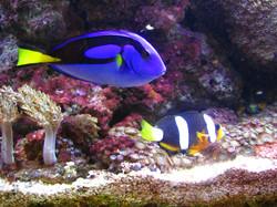pesci5.jpg
