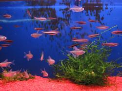 pesci misti10.jpg