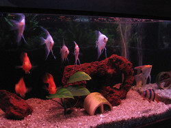 pesci misti9.jpg