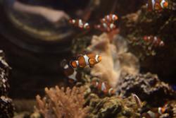 pesci4.jpg