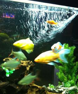pesci vari.jpg