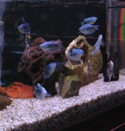 pesci misti2.jpg