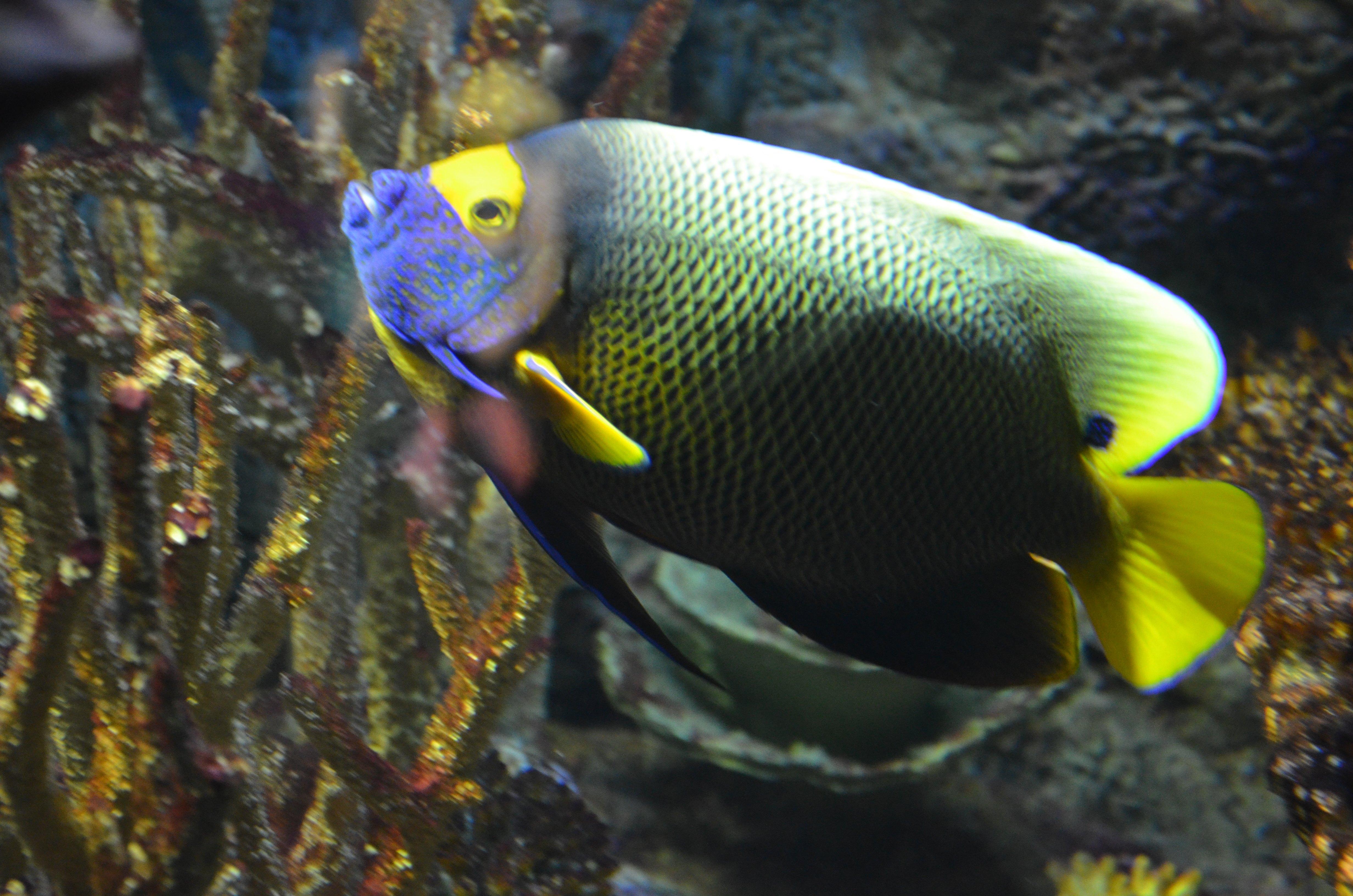 pesci1,jpg.jpg
