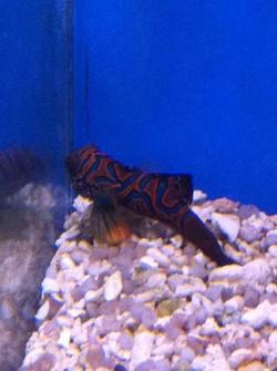 marino pesci1.jpg