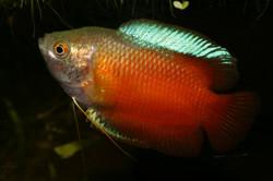pesci6.jpg