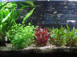 piante3.jpg