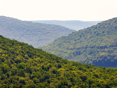 Pa. Supreme Court: State Forest Gas Lease Money Must Be Used For Conservation