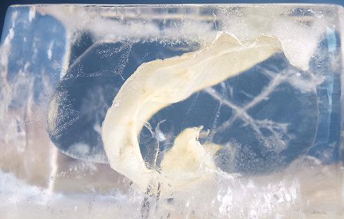 50頭急凍海鱸魚花膠 (一級花膠) 約300g