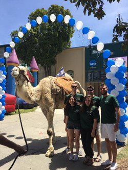 Camel on campus