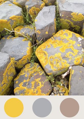 Farbkombinationen in der Natur