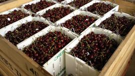 Cherry Lugs.jpg