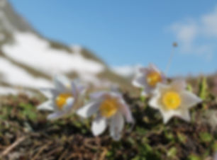 Frühling in Sedrun